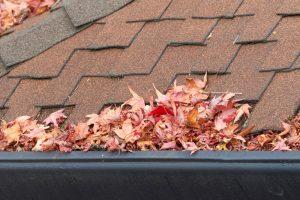 leaves in a gutter
