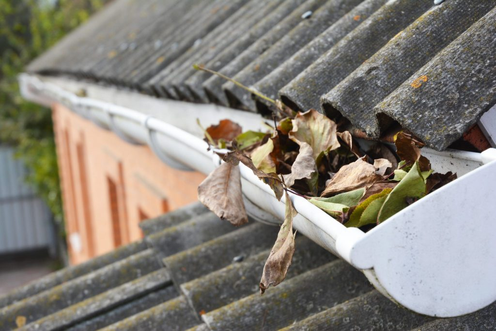 Old gutter clogged with leaves